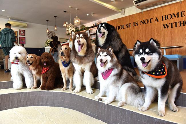 Husky House Cafe