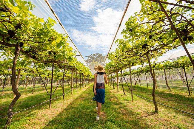 Nakhon-Ratchasima-PB-Valley-Khao-Yai-Winery199041MC